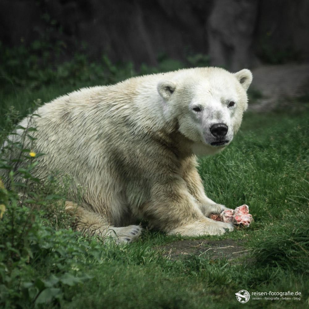 Eisbär - Was seid ihr denn für Vögel hinter der Scheibe?