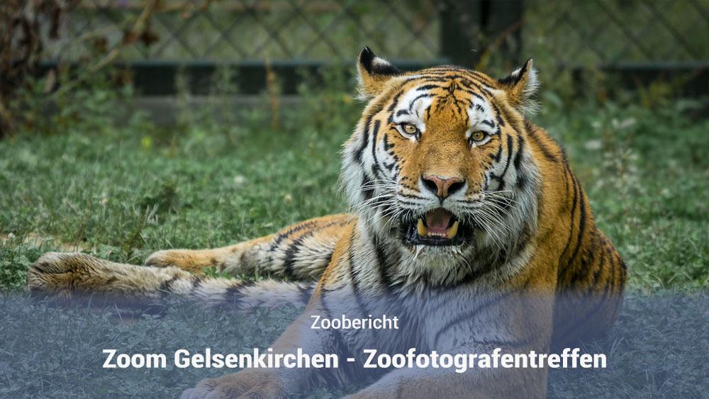 Zoom Gelsenkirchen Zoofotografentreffen