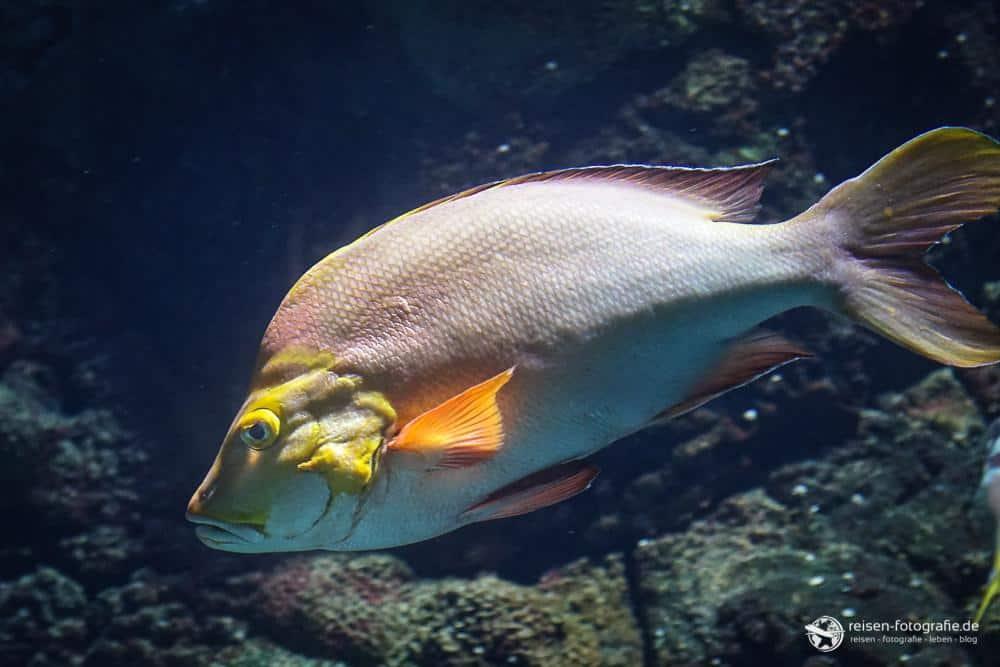 Fische im Bereich Ozean