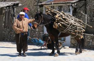 Pferd Ormana Taurusgebirge