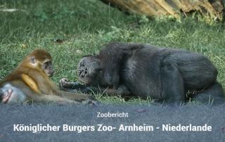 Burgers Zoo Arheim