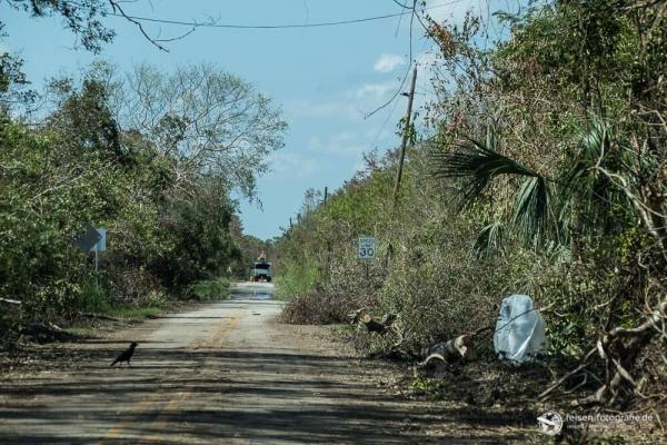 The Loop in den Everglades