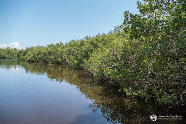 """Mangroven Wald im J.N. """"Ding"""" Darling National Wildlife Refuge"""