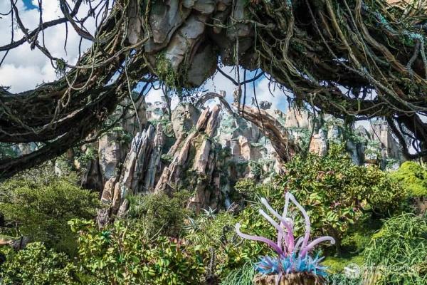 """""""Blumen"""" in Pandora"""
