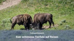 Fotowettbewerb Tierbilder