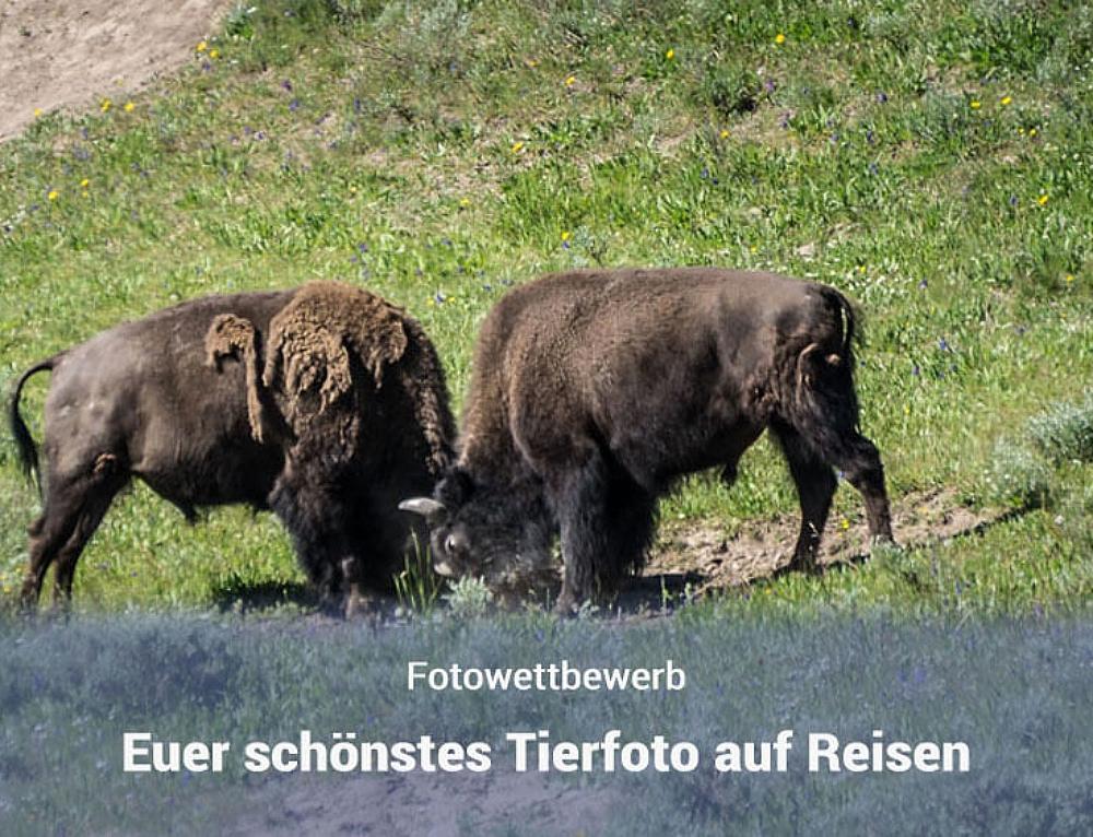 """Sieger im Fotowettbewerb """"Schönstes Tierfoto auf Reisen"""""""