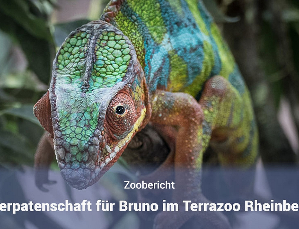 Tierpatenschaft im Terrazoo Rheinberg