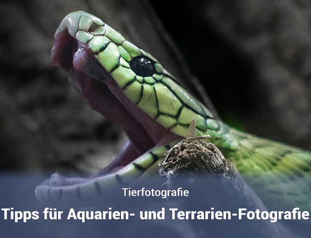 Fotografieren in Aquarien und Terrarien – Tipps und Tricks