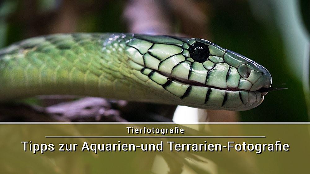 Fotografieren in Aquarien und Terrarien - Tipps und Tricks