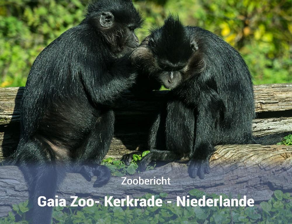 GaiaZoo – Kerkrade – Niederlande