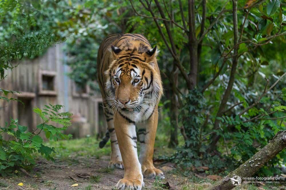 Platz 20 - Zoo Amneville