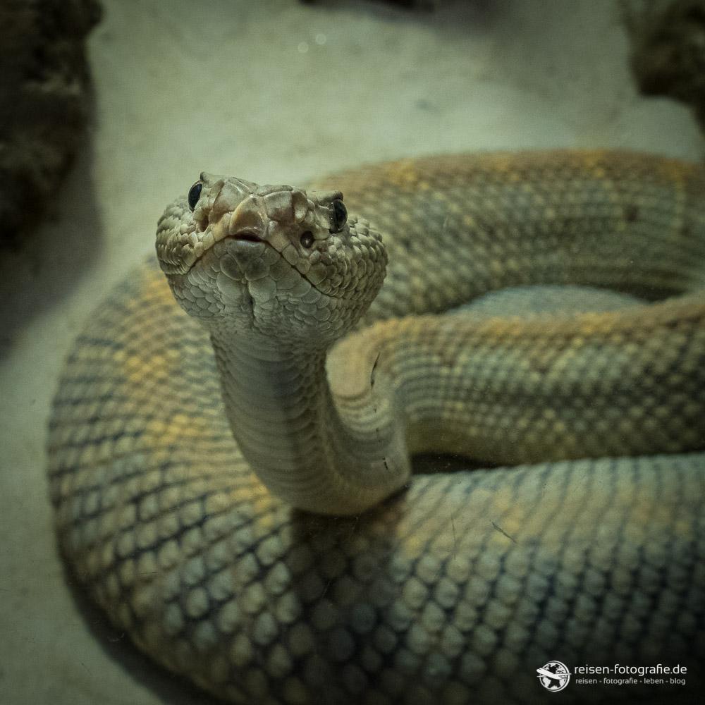 Platz 21 - Central Florida Zoo