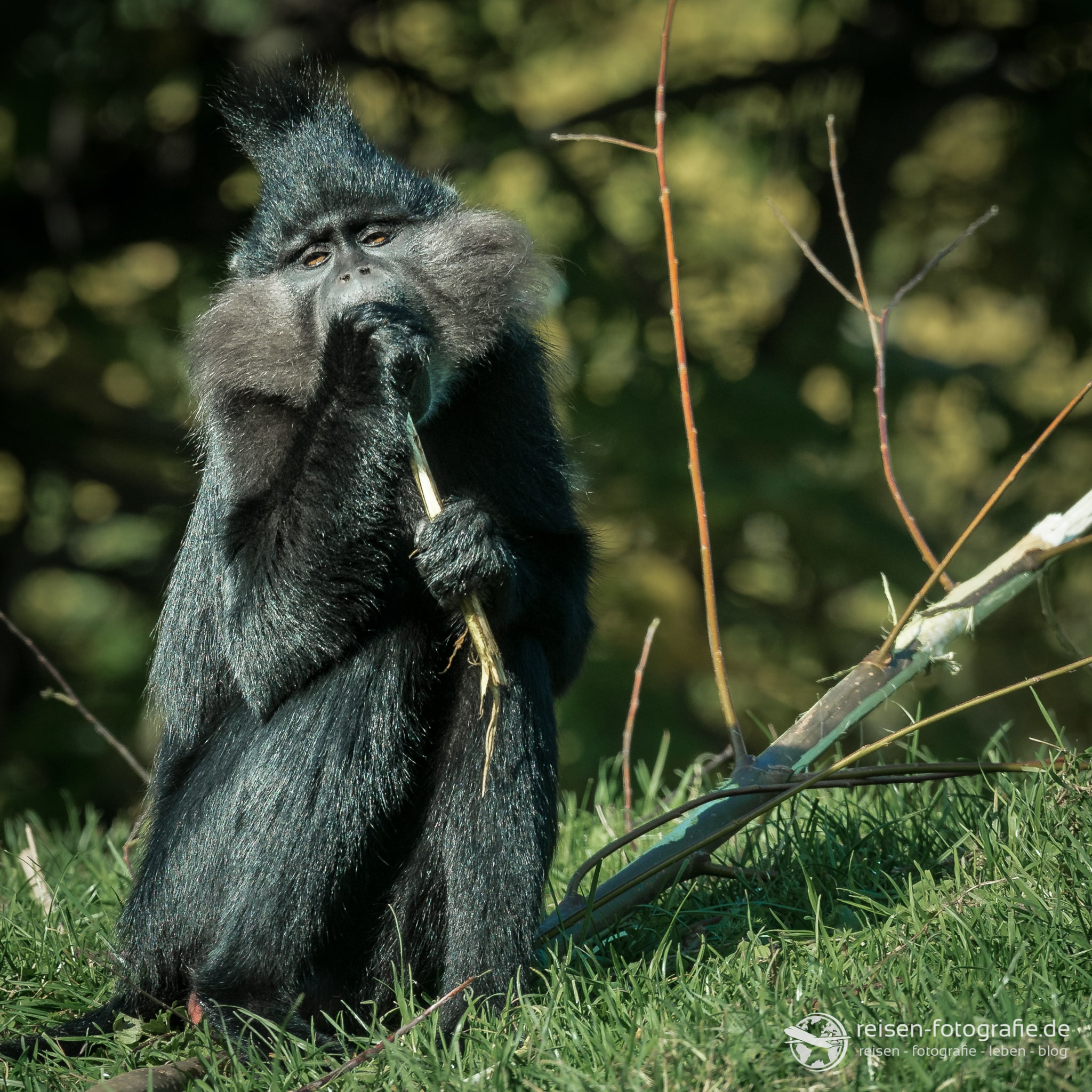 FoPa: Tieraufnahme