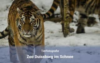 Zoo Duisburg im Schnee