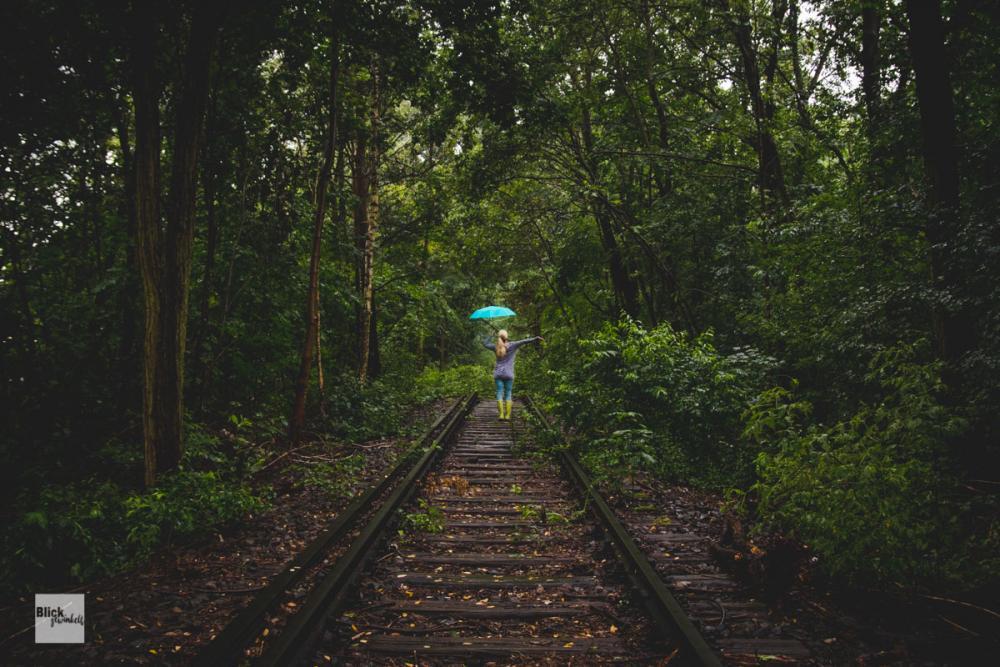 Regenwald Blickgewinkelt