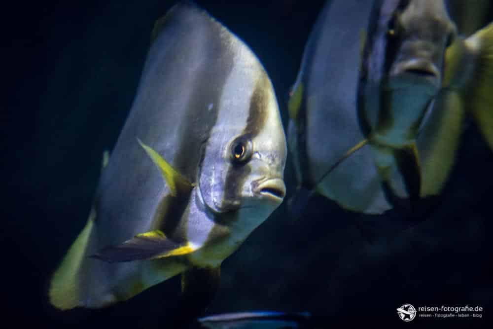 Fische im Ocean