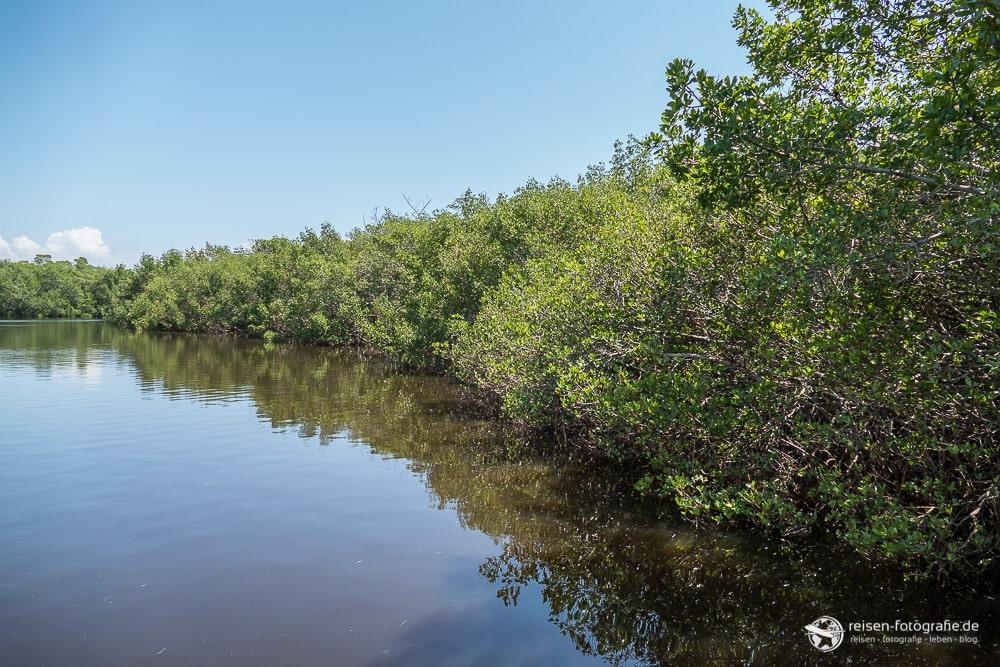 Ufer des Mangroven Waldes