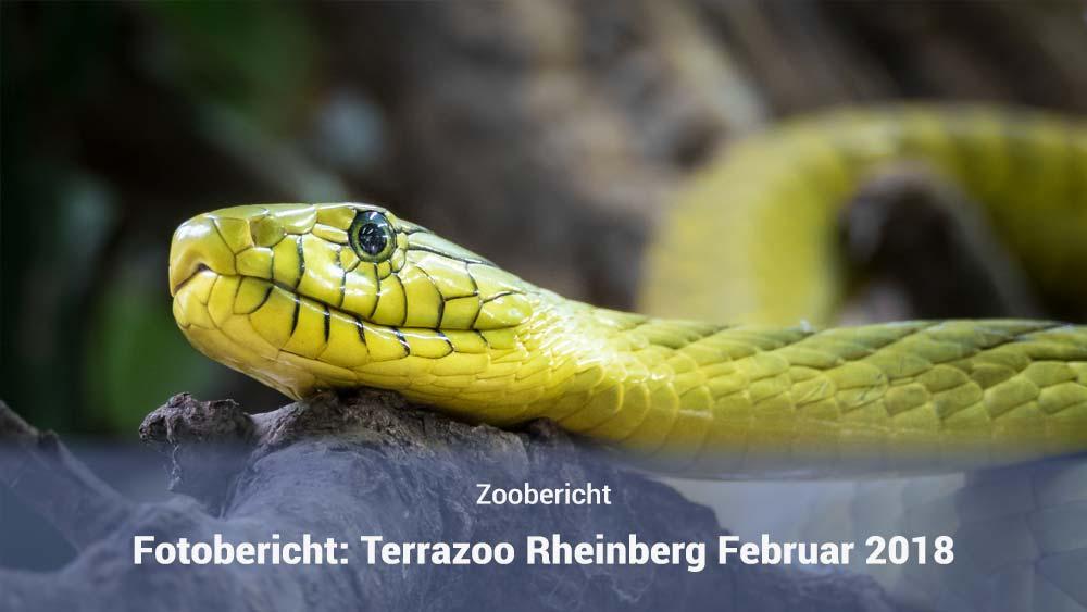 Terrazoo Rheinberg 2018