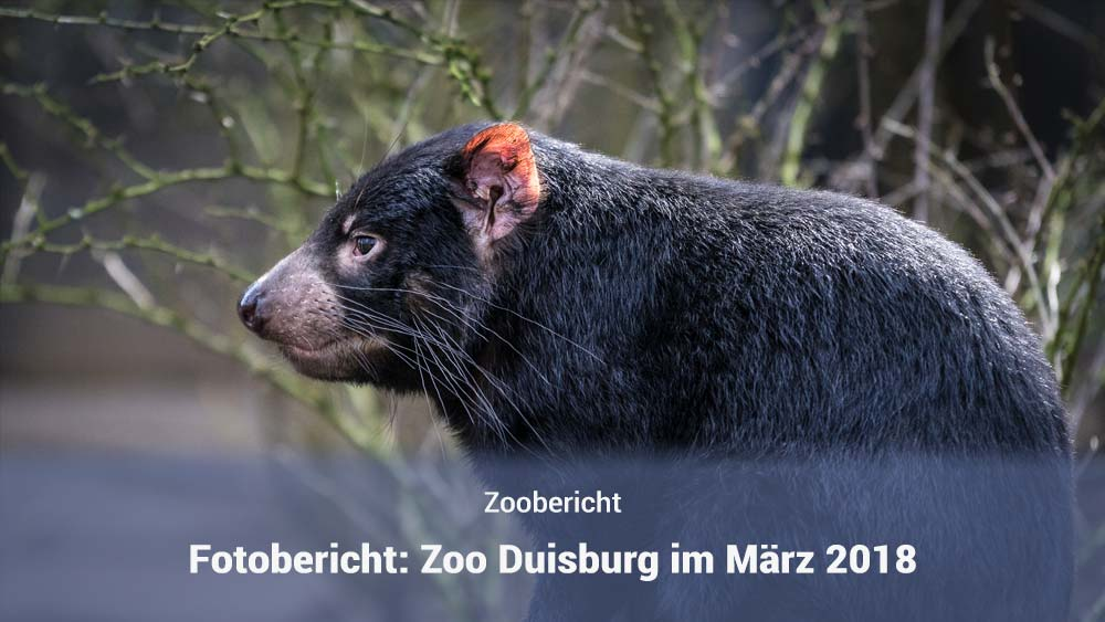 Zoo Duisburg im März 2018