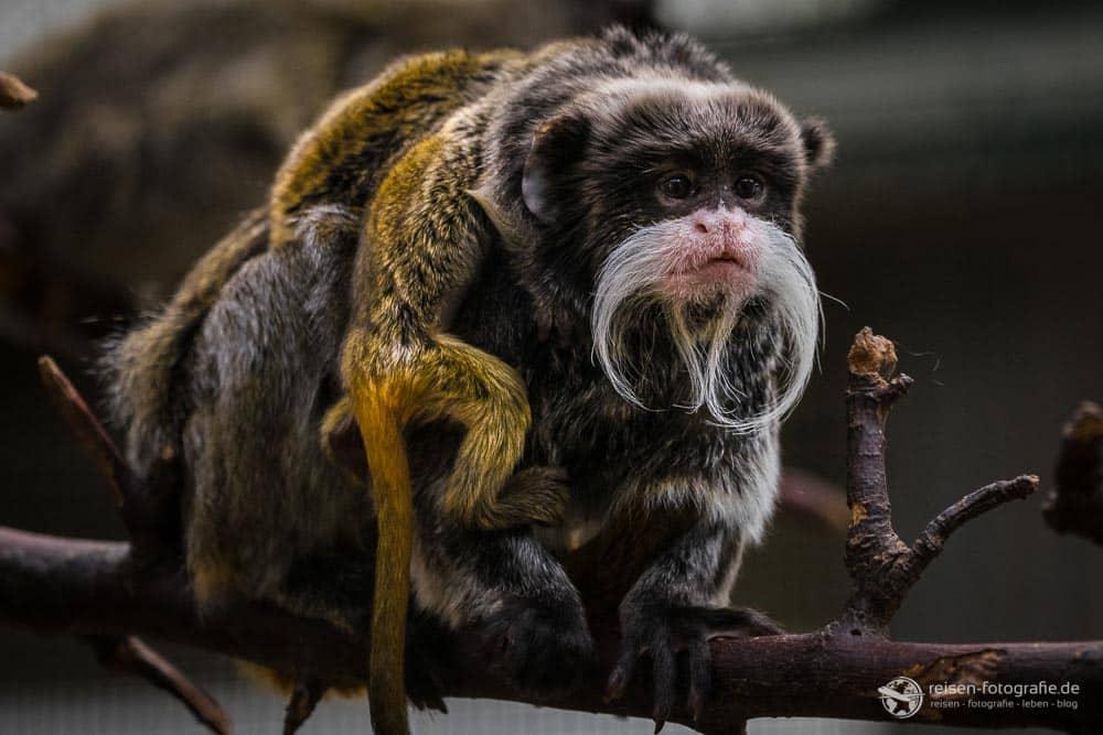 Zoo Dortmund März 2018