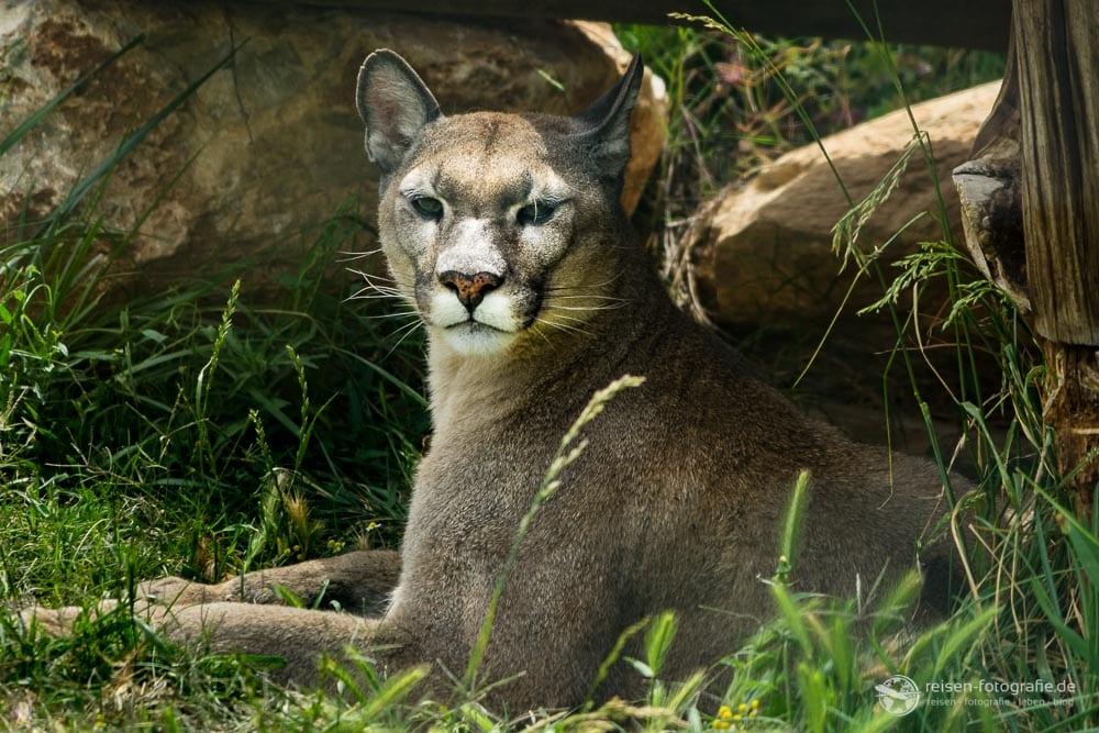Attika Zoological Parc