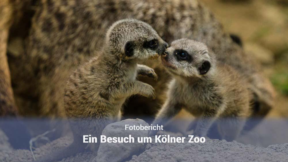 Zoo Köln 2018