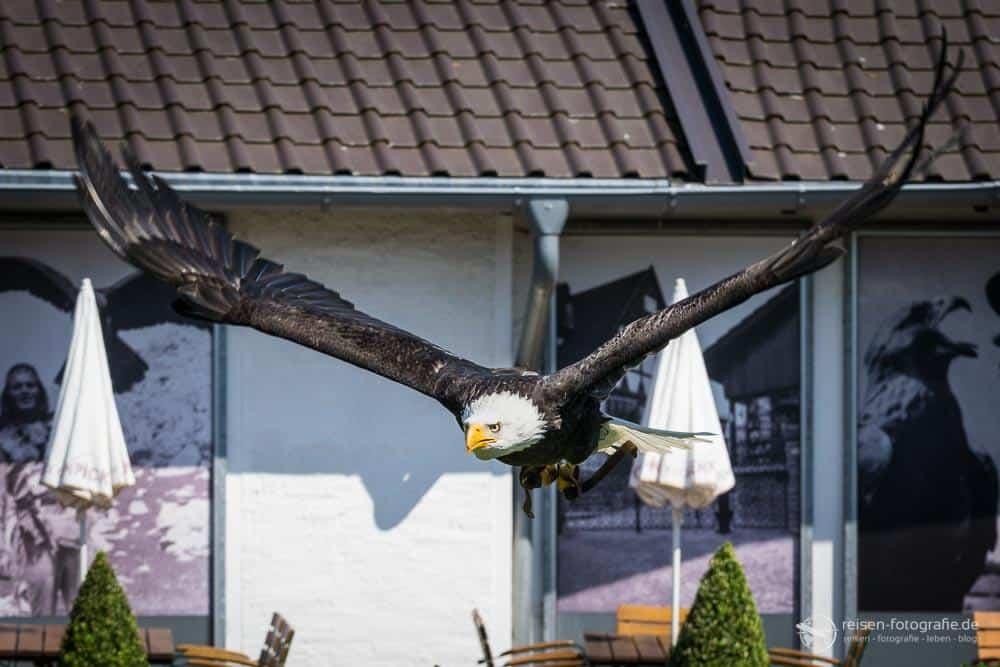 Adlerwarte Berlebeck Flugshow 21