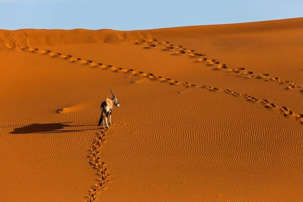 Namibia Oryx Soussusvlei www.foto-reise-welt.de