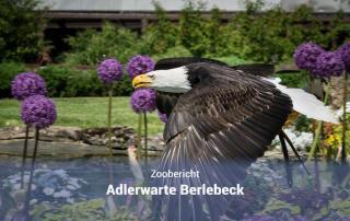 Adlerwarte Berlebeck