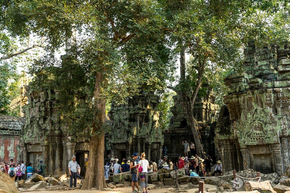 Ta Prom Tempel in Kambodscha Realität