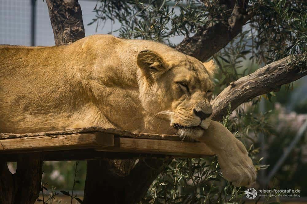 Attika Zoo - Athen