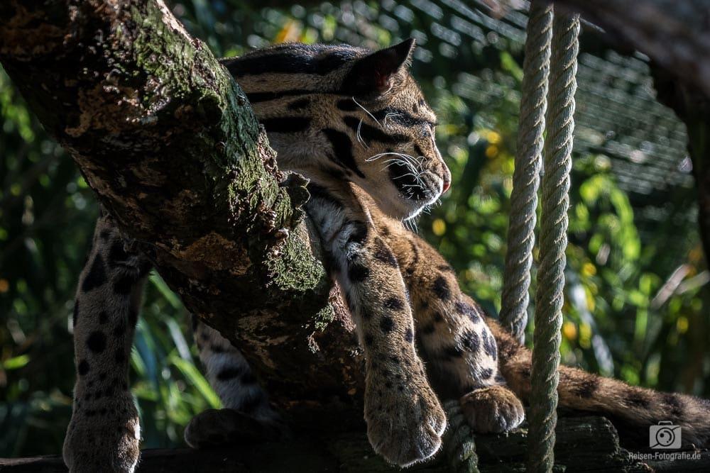 2018-07-20-zoo-duisburg-18