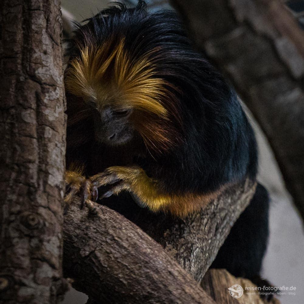 2018-zoo-wuppertal-18