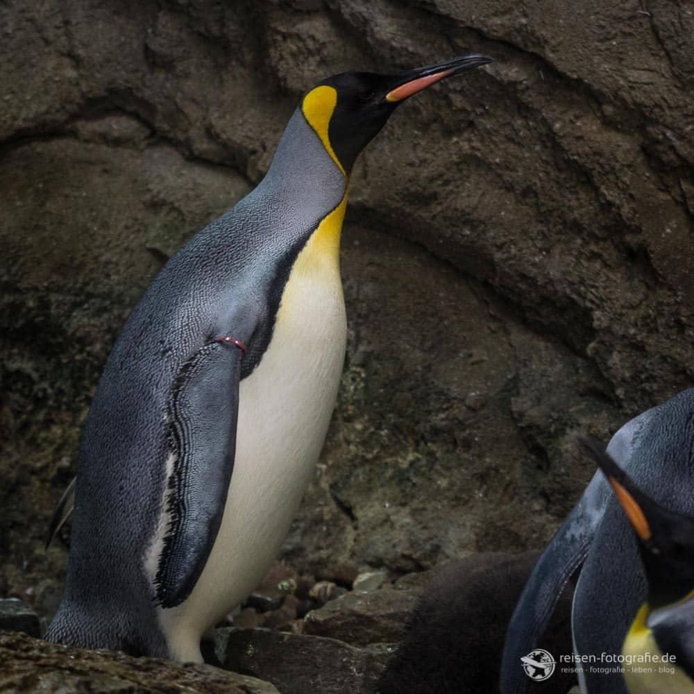 2018-zoo-wuppertal-9