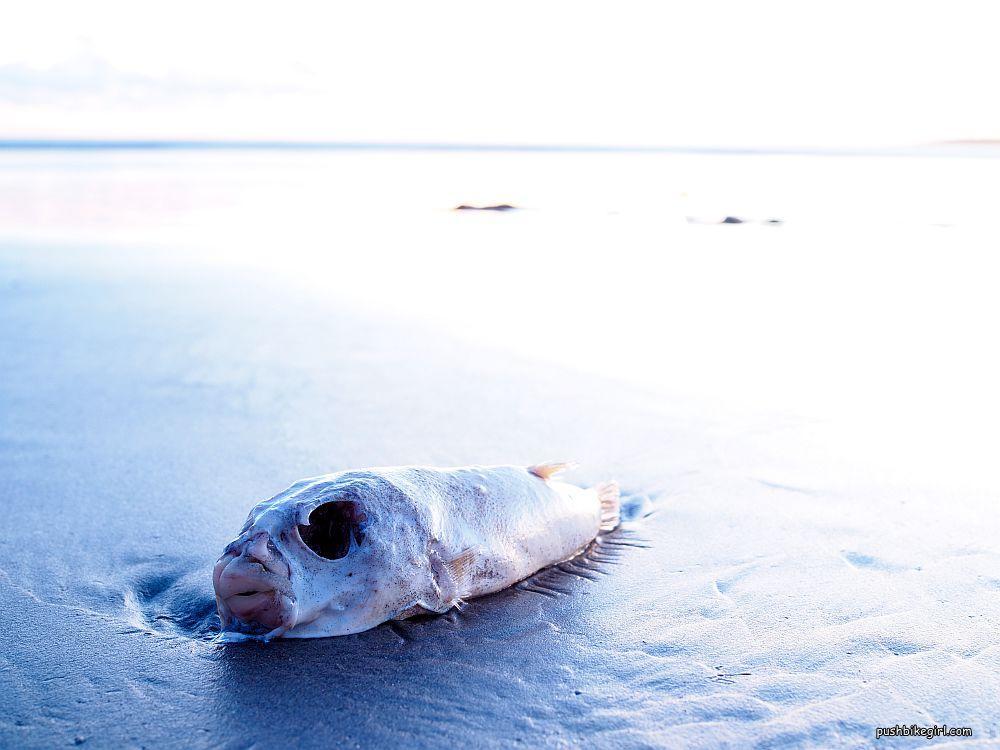 Heike Pirngruber Fisch