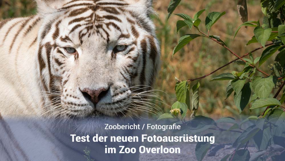 Ausrüstungstest im Zoo Overloon