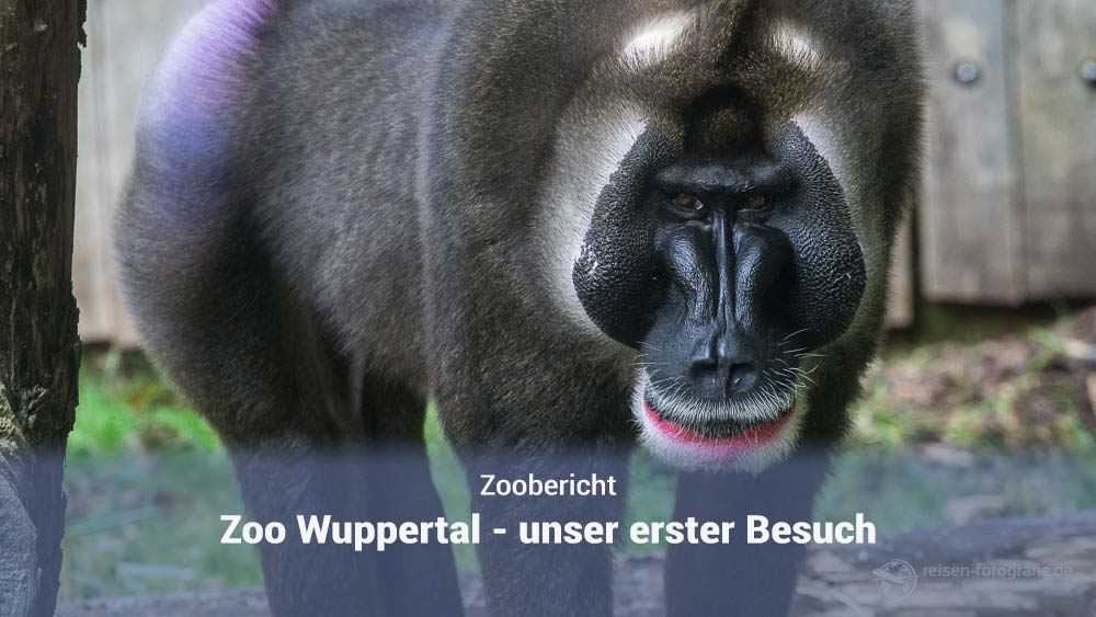 Zoo Wuppertal - unser erster Besuch