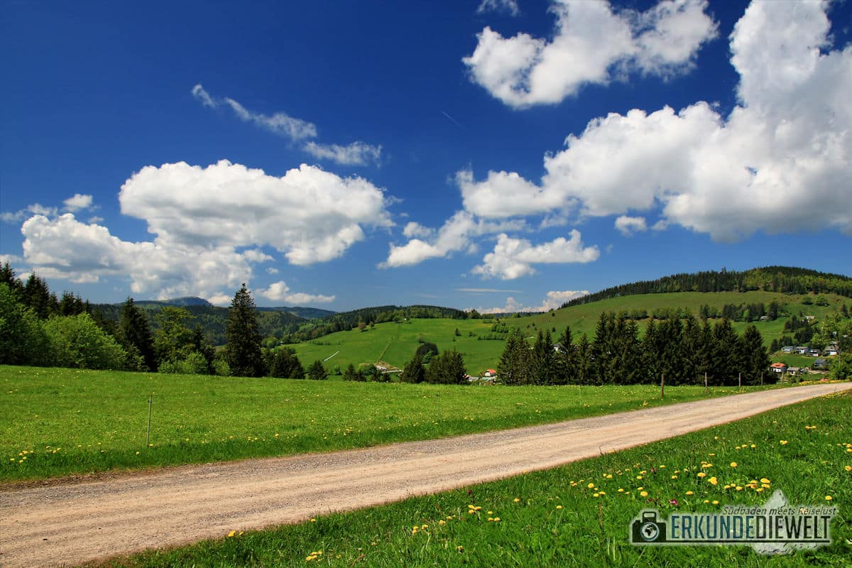 hiking through beautiful nature and landscape in the Black Forest in Germany
