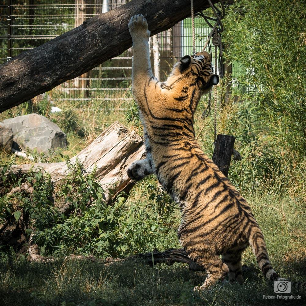 2018-08-18-zoo-duisburg-1