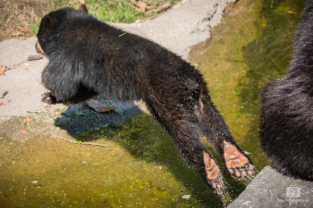 2018-08-18-zoo-duisburg-13