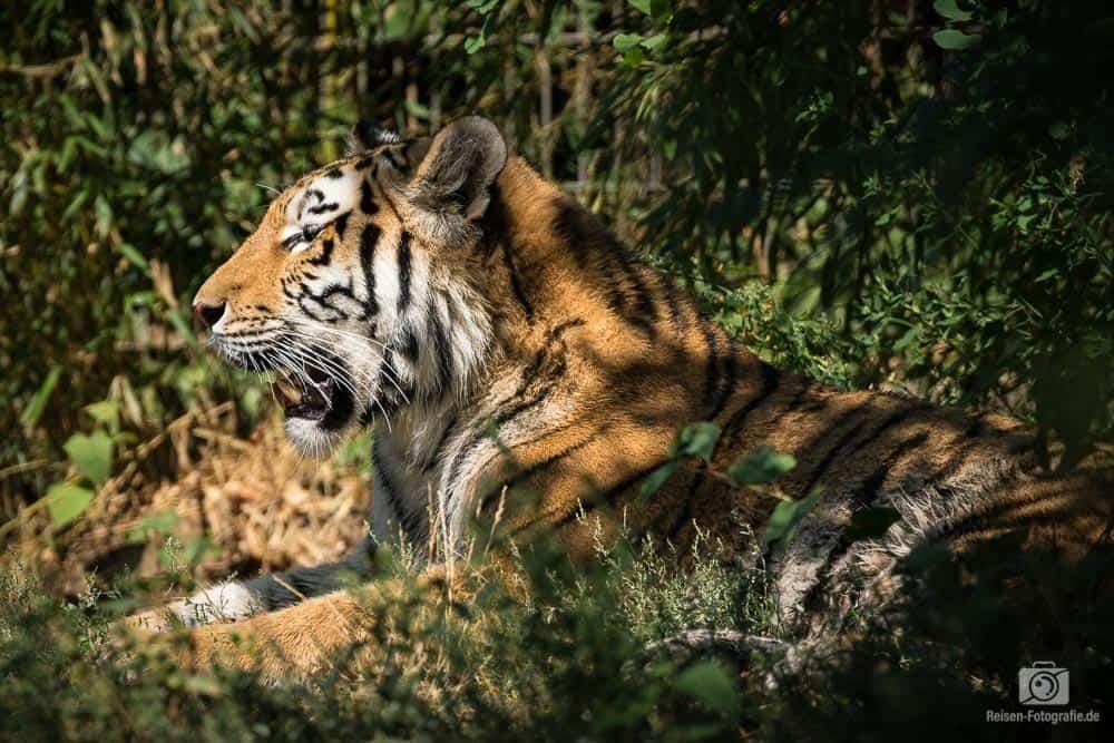 2018-08-18-zoo-duisburg-6