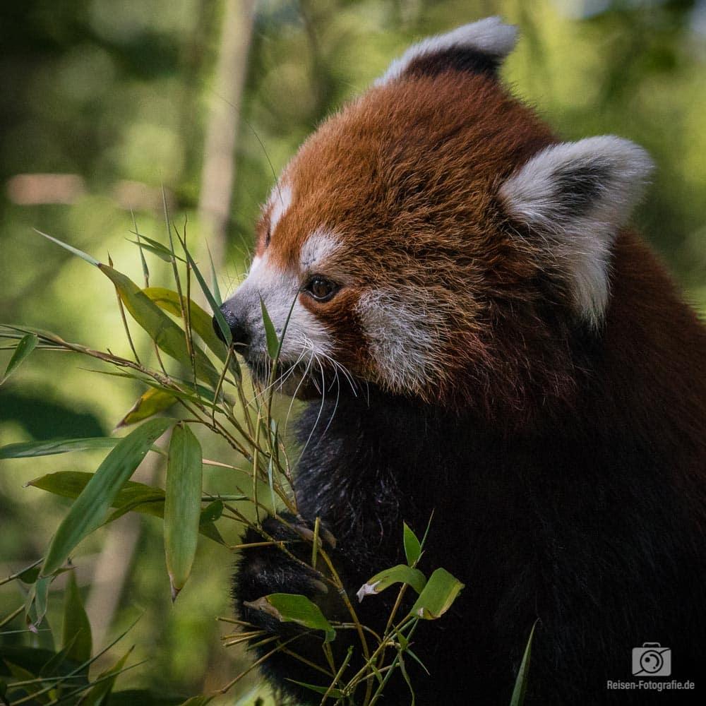 2018-08-18-zoo-duisburg-7