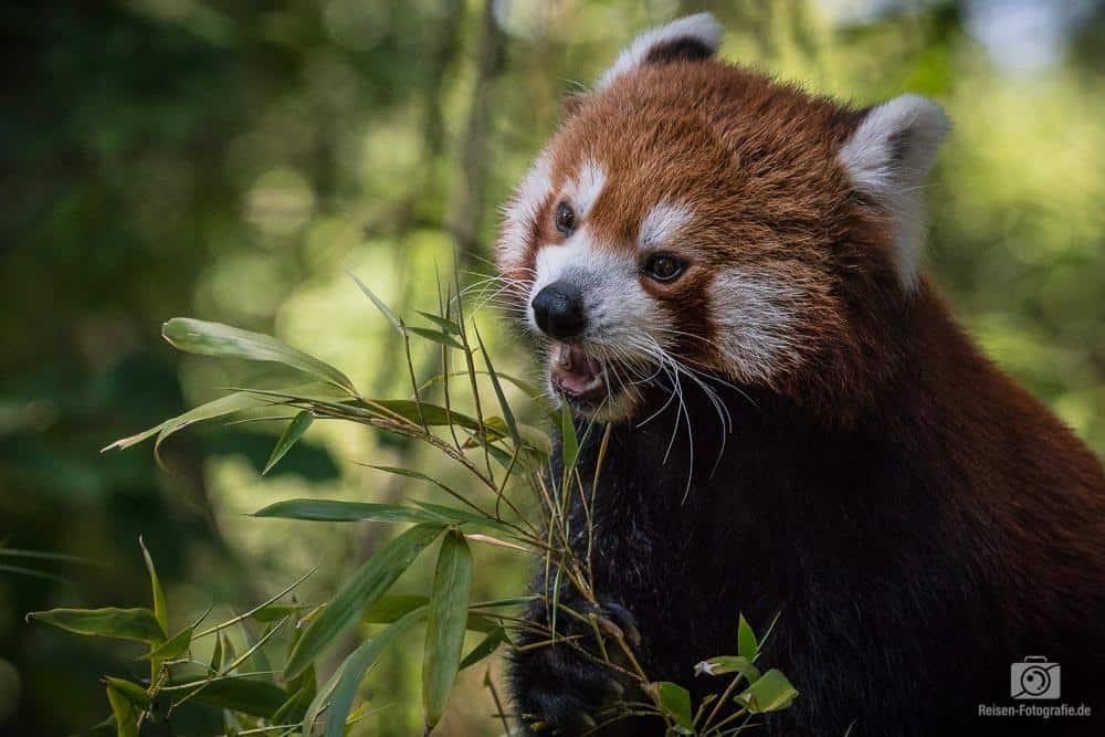 2018-08-18-zoo-duisburg-8