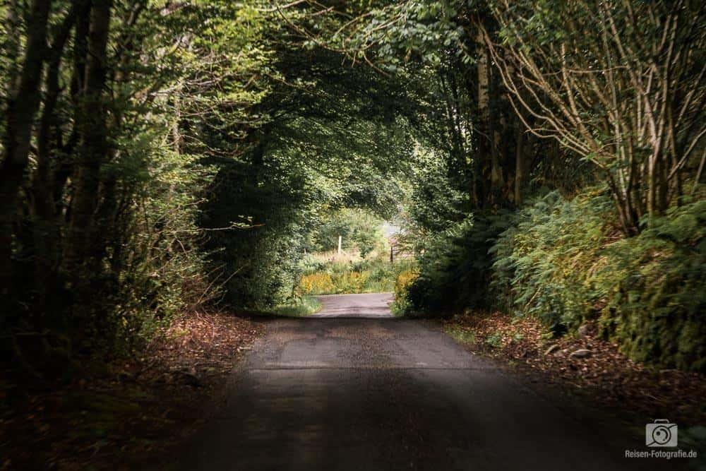 Single Line Road Schottland