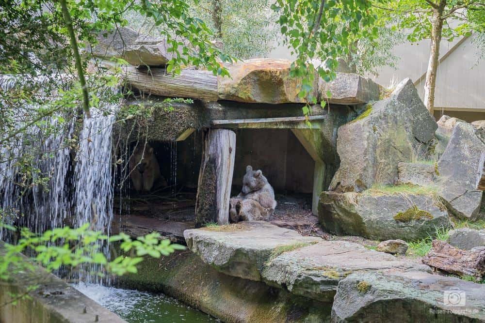 zoo-muenster-2018-1