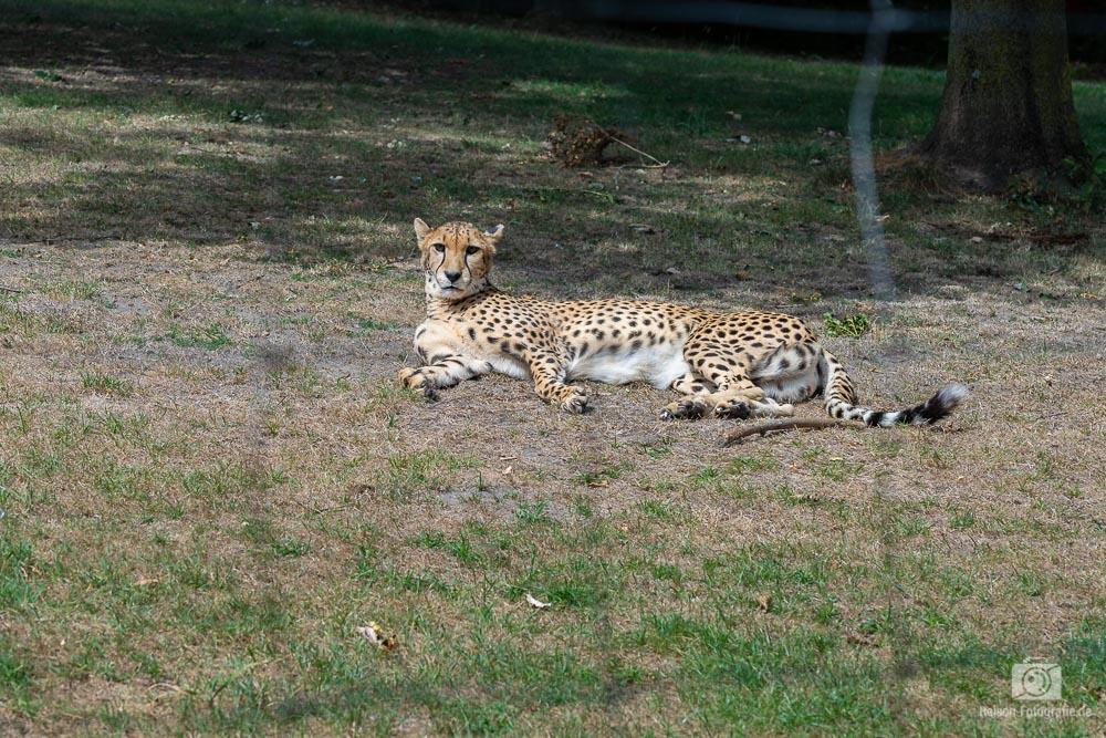 zoo-muenster-2018-17