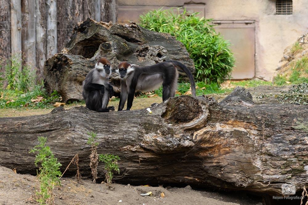 zoo-muenster-2018-18