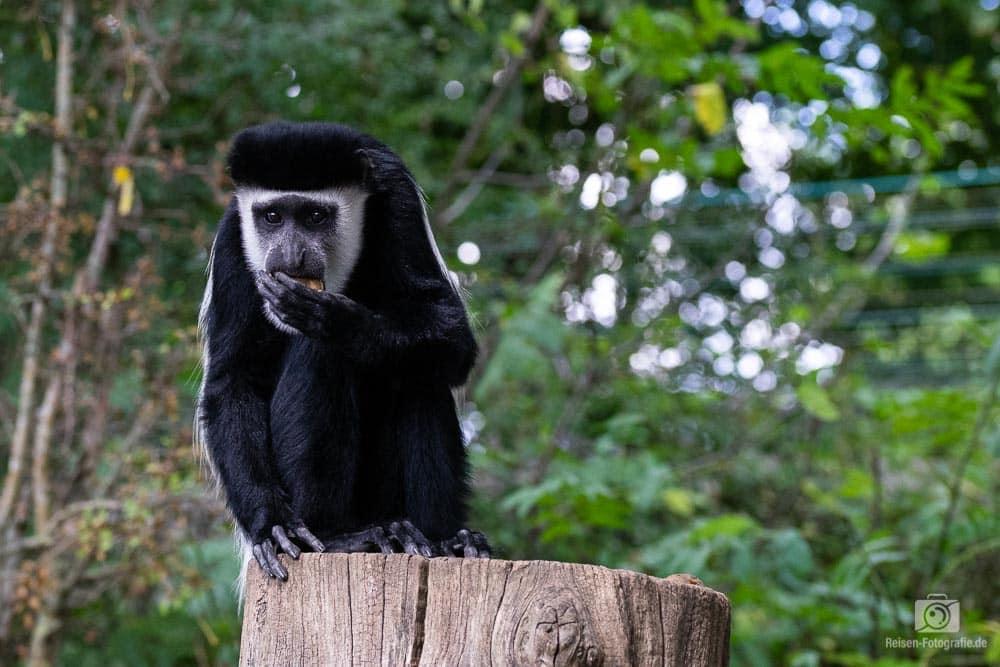 zoo-muenster-2018-22