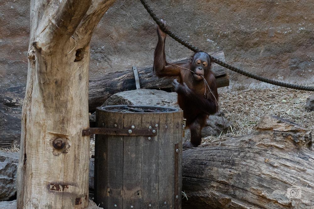 zoo-muenster-2018-27