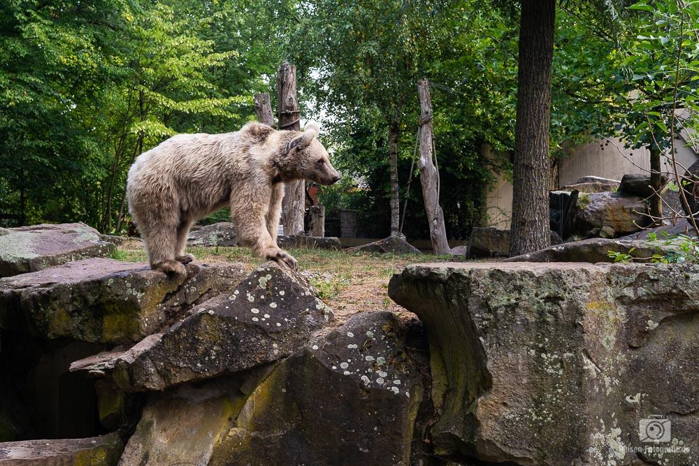zoo-muenster-2018-3